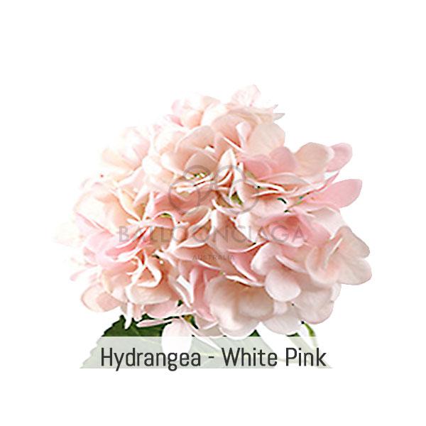 flower-hydrangea-white-pink